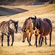 20210307 Klein Horses South Dakota