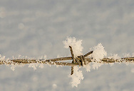 Photo Randy Vanderveen<br /> Grande Prairie, AB<br /> 2020-04-06<br /> Delicate hoar frost contrasts with the cold sharpness of a barb on a wire fence lining a farmer's field southwest of Grovedale.