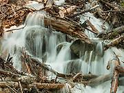 Glacier National Park.  Avalanche Debris in Haystack Creek.