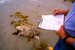 Stock photo of a Padre Island Environmental Beach Survey