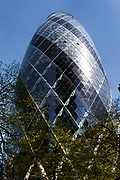 Spring trees grow in front of the Gherkin at Number 30 St Mary Axe. Financial buildings in the City of London.