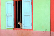 A cat sits at the window of a colourfully painted Buddhist temple in Kone Soth, a PaO Black Karen ethnic minority village in Kayah State, Myanmar on 18th November 2016