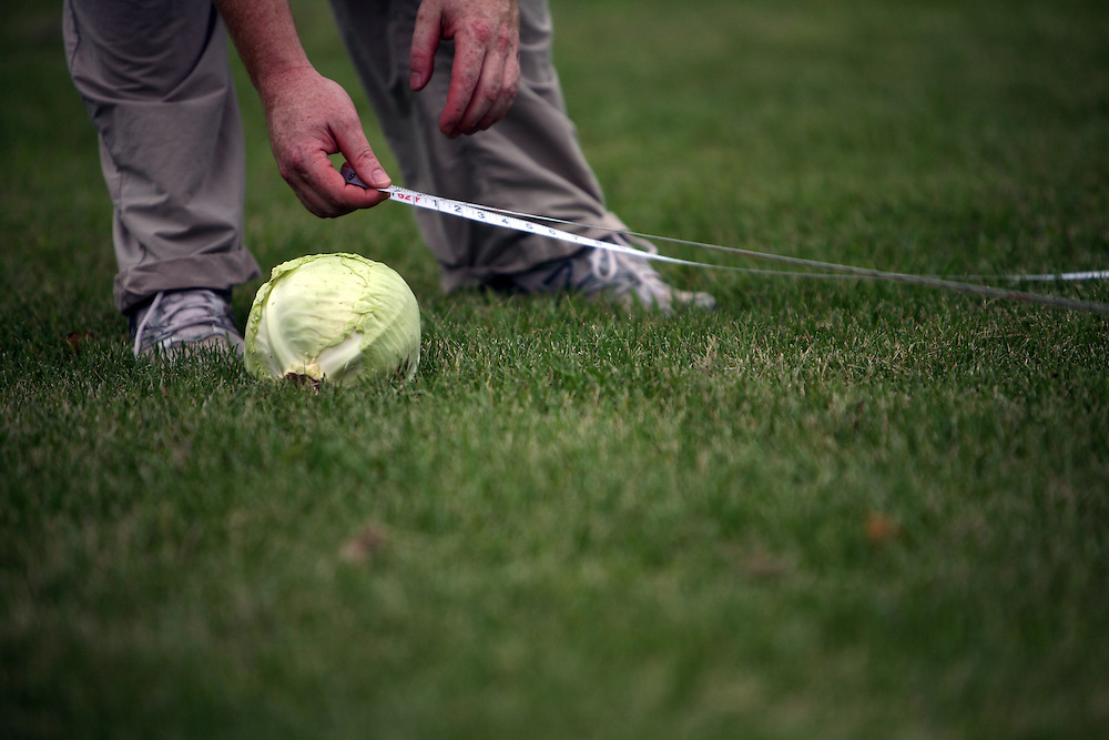 A judge measures distance at the cabbage toss during Sauerkraut Days in Henderson, MN, June 23, 2012.