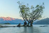 Oceania; New Zealand; Aotearoa; South Island; Otago, Wanaka, Southern Alps with Lake Wanaka