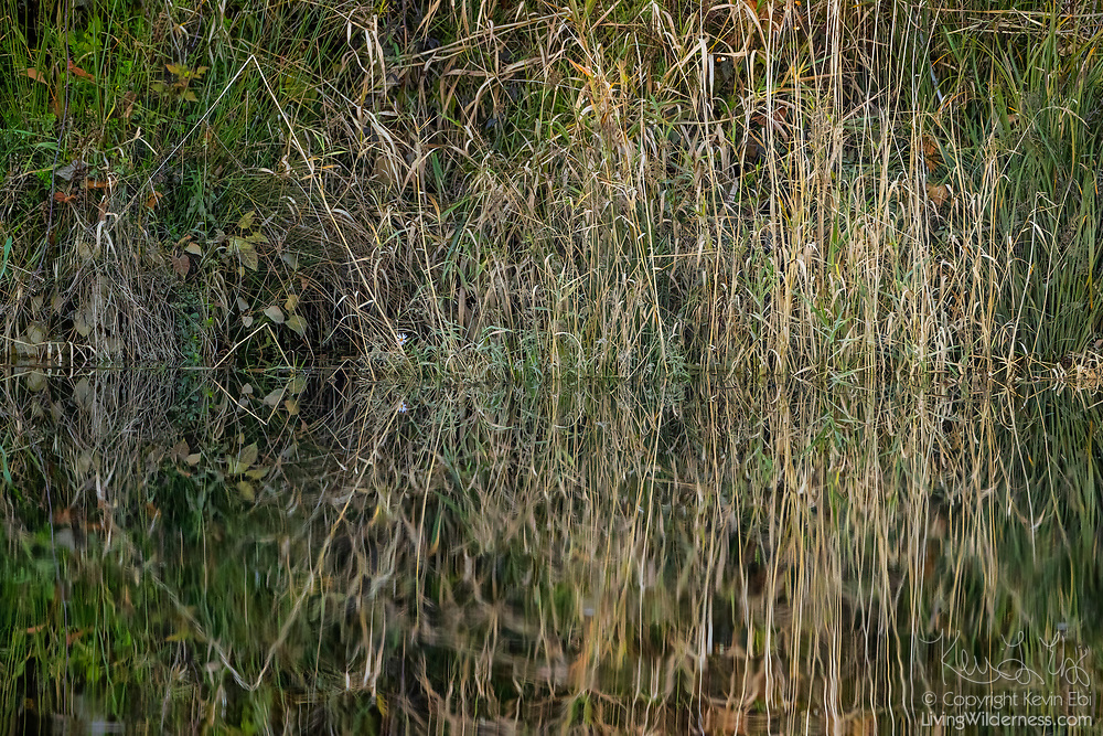 Grass reflects onto the calm water of Ebey Slough in Snohomish County, Washington.