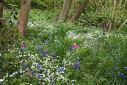 Wild flowers in a wood near Sissinghurst