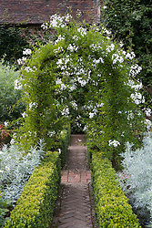 The White Garden at Sissinghurst Castle with Solanum  jasminoides 'Album' growing over an arch. Low box hedges, brick path
