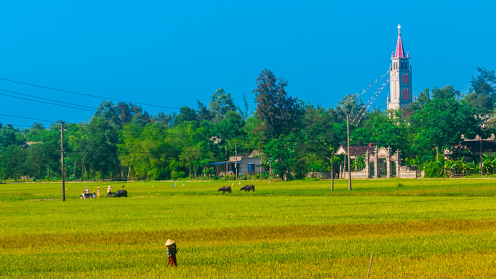 Farmer working in rice paddies in a village in the countryside outside Hue, Central Vietnam.