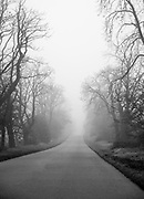 Foggy misty tree lined country road Photographed in the early morning in Moravia, Czech Republic