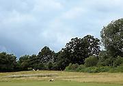 London, Hampstead heath Park