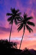 Twin coconut palm tree, sunset, Kaneohe Bay, Oahu, Hawaii