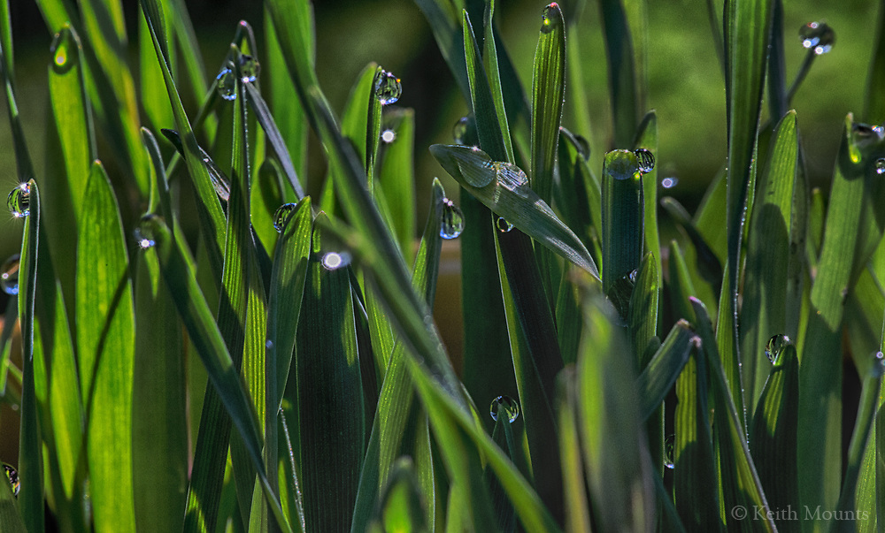 Morning dew can get your feet wet and be jewels of light.Focus on the light.