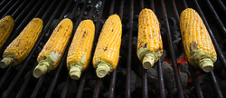 © Licensed to London News Pictures. <br /> 06/06/2014. <br /> <br /> Middlesbrough, England<br /> <br /> Corn on the cob is cooked in a food stall at the start of the 24th Middlesbrough Mela event.<br /> <br /> The Middlesbrough Mela has become the largest and most spectacular multicultural festival in the North East.<br /> <br /> Photo credit : Ian Forsyth/LNP