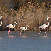 Wildfowl & Wetlands Trust