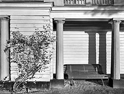Scansen Bush and Bench, Stockholm, Sweden