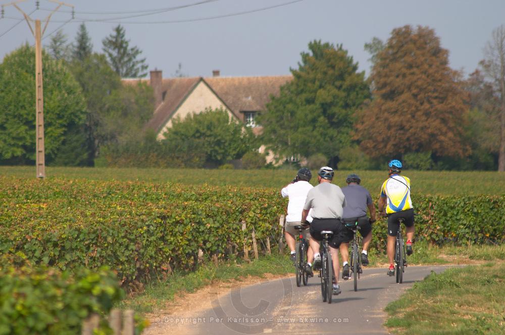 Bikers in the vineyard. Beaune, Cote d'Or, Burgundy, France