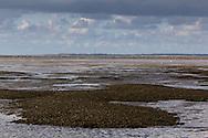 Mosselbanken in Oostelijk Waddengebied | Mussel banks in eastern Wadden Sea