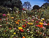Flower Garden on Route 1, Madison, CT