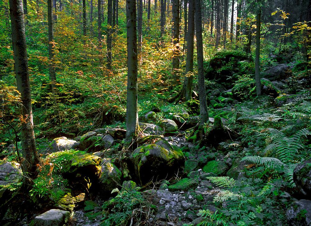 Tatrzański las, Polska<br /> Tatras forest, Poland