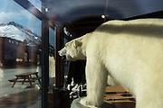 Stufferd Polar Bear<br /> Longyearbyen<br /> Svalbard<br /> Norway<br /> Arctic Ocean