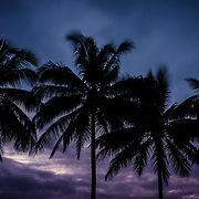 Palm trees at sunset at Port Douglas