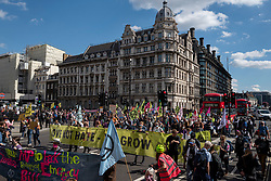 © Licensed to London News Pictures. 01/09/2020. London, UK. Members of the Extinction Rebellion (XR) environmental campaign group gather in central London to blockade Parliament. XR plan to peacefully disrupt the UK Parliament with actions planned over two weeks, until MPs back the Climate and Ecological Emergency Bill and prepare for crisis with a National Citizens' Assembly. Photo credit: Rob Pinney/LNP