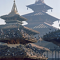 Kathmandu, Nepal. Pigeons flock atop pagoda roofs on temples at Durbar Square.