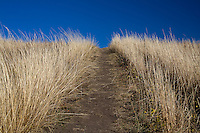 Nose Hill Park in Calgary, Alberta, Canada..©2007, Sean Phillips.http://www.Sean-Phillips.com