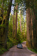 Sunlight through redwood trees in forest and car driving on Howland Hill Road, Jedediah Smith Redwoods State Park, California