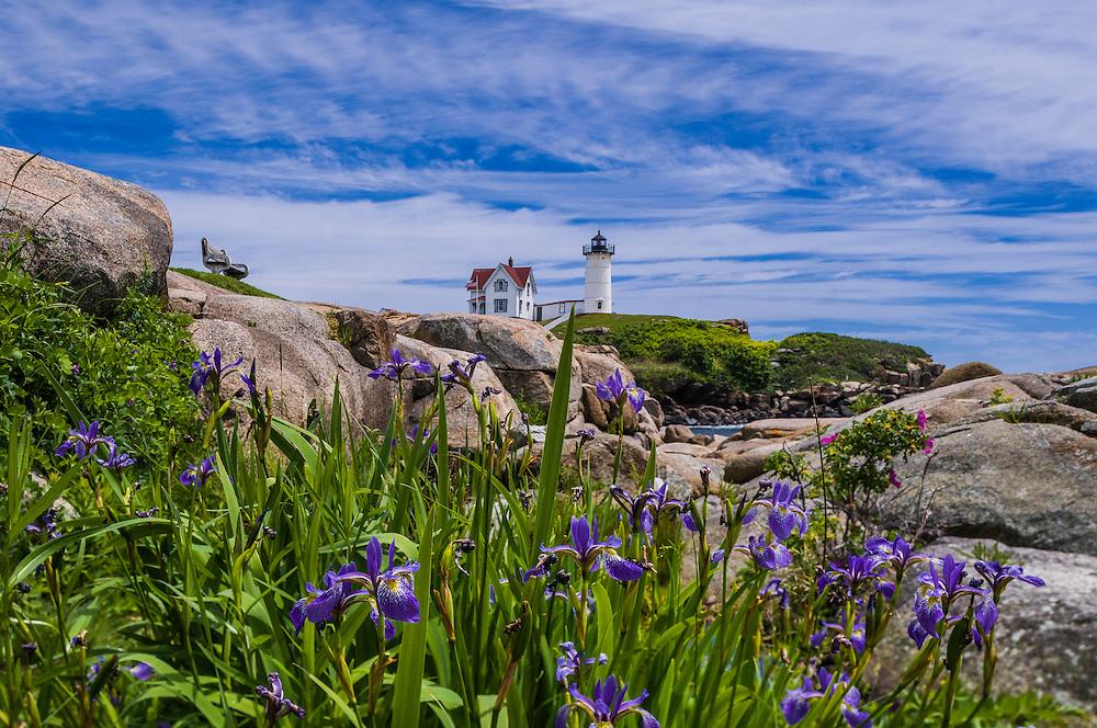 Nubble Light House (aka Cape Neddick Lighthouse), with Blueflags, wildflowers, York, ME