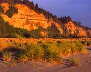 Grasses and Golden Cliffs at Sunset,Gold Bluffs Beach, Prairie Creek Redwoods State Park, Redwood National Park, California