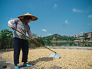 While new machinery is rapidly transforming China, a lot of farm work is still done the old fashioned way. Here, an auntie spreads peanuts for drying on the concrete squares that dot the villages. Both men and women share in the chores equally.