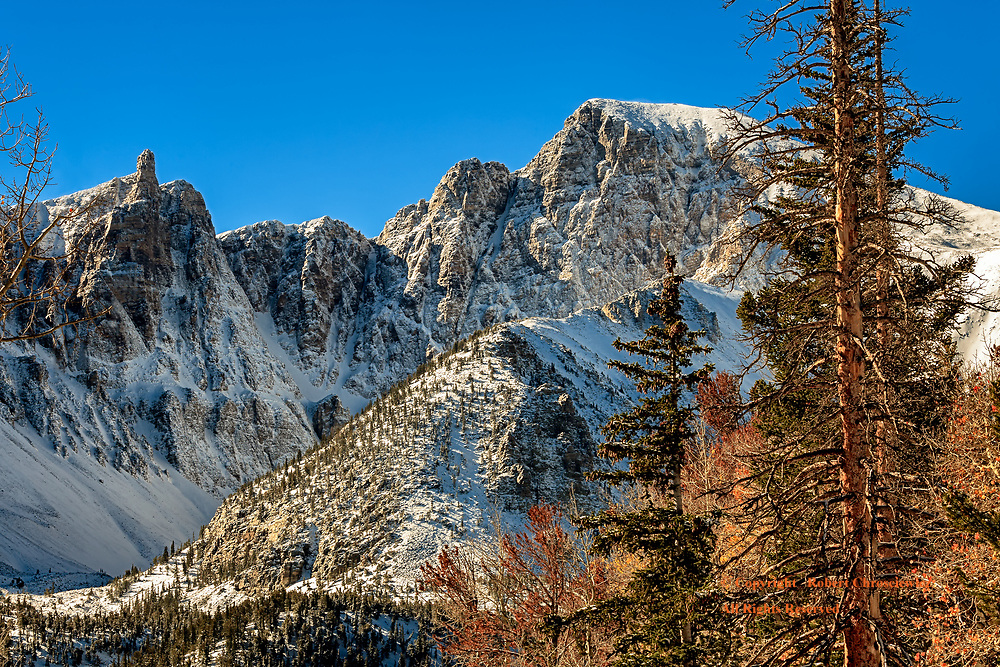Winter Morning-Wheeler Peak: A winter landscape of snow covered forests and Wheeler Peak is set against a brilliantly blue sky, in Great Basin National Park, Nevada USA.