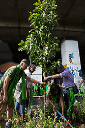 London, UK. 14th June, 2018. Members of the Grenfell community plant a camellia beneath the Westway in a garden in front of the Wall of Truth on the first anniversary of the Grenfell Tower fire. 72 people died in the Grenfell Tower fire and over 70 were injured.