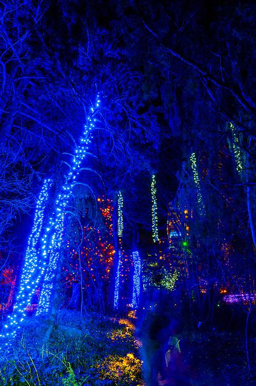Blossoms of Light , one million lights illuminating the Denver Botanic Gardens during the holiday season, Denver, Colorado USA.