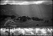 vineyard landscape, Napa Valley, California