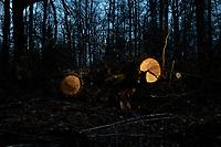 Puszcza Bialowieska, 02.2020. N/z pejzaz Puszczy Bialowieskiej noca fot Michal Kosc / AGENCJA WSCHOD