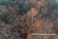 63877-01512 Aerial view of lone Sycamore tree in winter woods Marion Co. IL