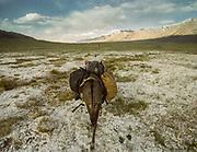 Donkey G on the trail near Chaqmaqtin Lake, Mareile leads the way on the horizon.<br /> <br /> Adventure through the Afghan Pamir mountains, among the Afghan Kyrgyz and into Pakistan's Karakoram mountains. July/August 2005. Afghanistan / Pakistan.