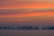 Red clouds at sunrise over trees and radiation fog in field, Merced National Wildlife Refuge, Central Valley, California