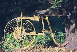 Old Motorcycle Grown Between Trees