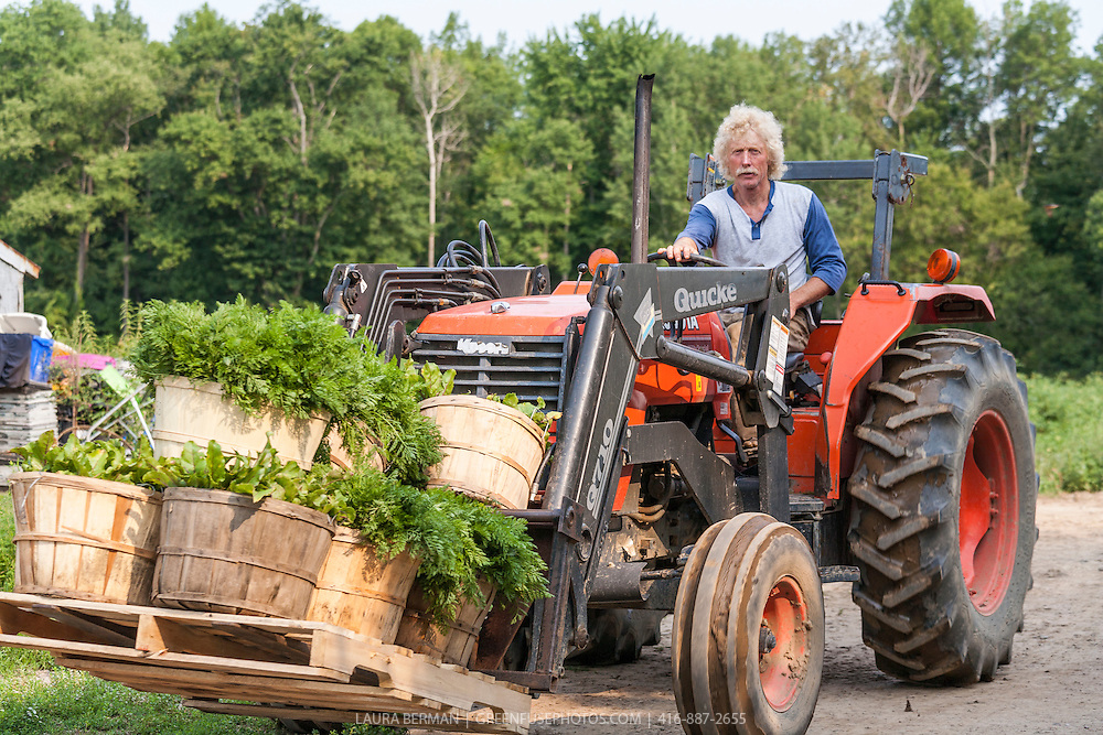 Organic farmer Ted Thorpe brings in bushels of carrots and lettuce on a tractor