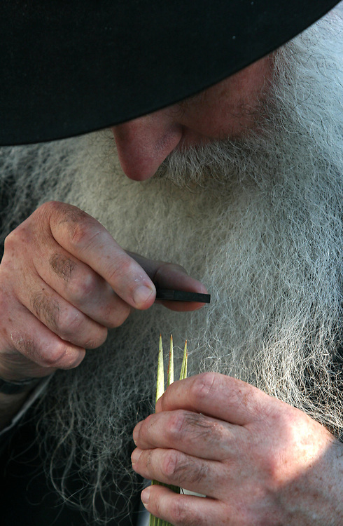An Ultra Orthodox Jewish man uses a magnifying glass to check a Lulav (a ripe, green, closed frond from a date palm tree), one of the Four Species which will be used during the celebration of the Sukkot (Tabernacles) holiday, in Jerusalem, on September 24, 2007. The word Sukkot is the plural of the Hebrew word sukkah, meaning booth or hut. The sukkah is reminiscent of the type of thatched huts in which the ancient Israelites dwelt during their 40 years of wandering in the desert after the Exodus from Egypt. Throughout the holiday, meals are eaten in the sukkah, and some families sleep there and a blessing is recited every day over the Four Species.