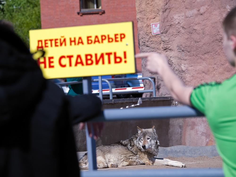 """Wolf im Moskauer Zoo. Der Moskauer Zoo wurde 1864 eröffnet und ist damit der älteste Zoo Russlands. Hier werden rund 1000 Tierarten mit über 6.500 Exemplaren, vom Rotwolf über den Zobel bis zu den Elefanten, gehalten. Im """"Exotarium"""", einer Art Aquarium, kann man Unterwasserwelten samt Fauna tropischer Meere bewundern. Der Zoo wurde von 1990 bis 1997 grundlegend modernisiert und auf seine heutige Fläche von rund 21,5 Hektar erweitert.<br /> <br /> Wolf at Moscow Zoo. The Moscow Zoo is the largest and oldest zoo in Russia - It was founded in 1864."""