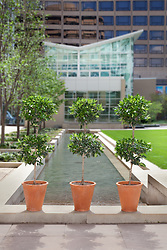 Topiary outside on condominium grounds