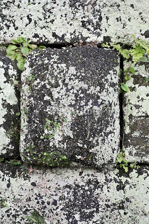 stone sticking out with green moss type wild plant life growth