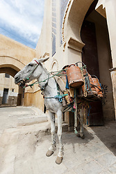"Horse at Bab Bou Jeloud, the ""Blue Gate"", entrance to the Fes al Bali medina, Fes, Morocco"
