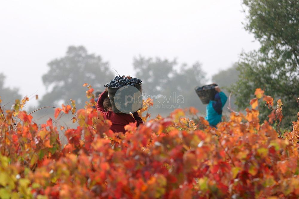 Vendimia. La Rioja ©Daniel Acevedo / PILAR REVILLA