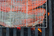 Freshly caught sockeye salmon filets grill over a fire at a campground on the Copper River near Chitina, Alaska.