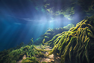Underwater Scene<br />